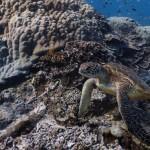 Google pioneers underwater content